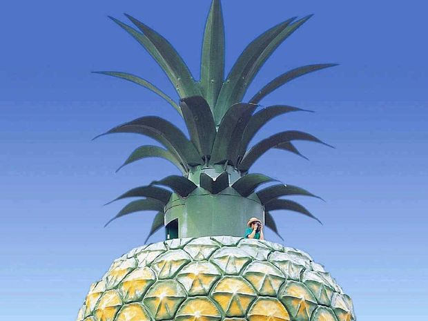 AT ITS HEIGHT: The 16m Big Pineapple in a 2009 photo.