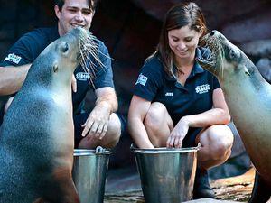 Rubbing flippers: reunion seals Katanya's arrival