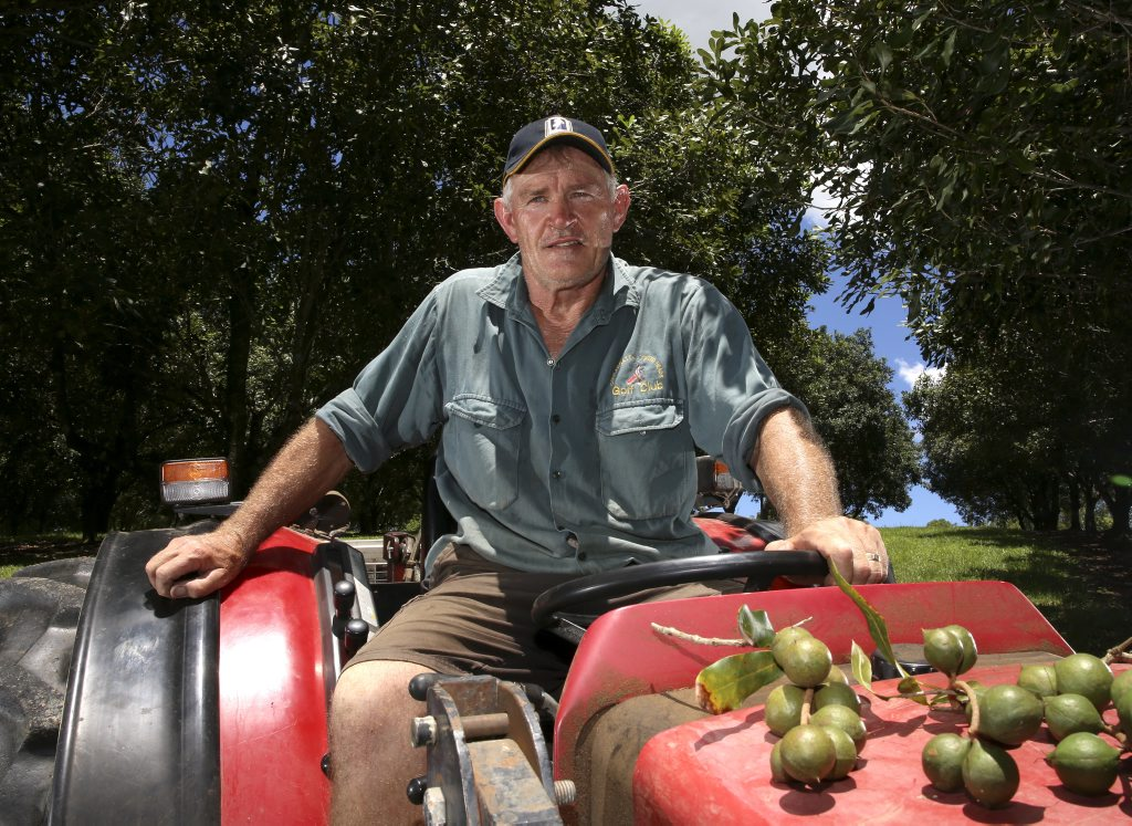 Graeme Lawrence of Tweed Valley Macadamias. Photo: Nolan Verheij-Full / Tweed Daily News
