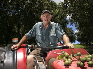 China set to go nuts for macadamias