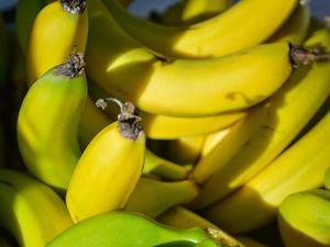 Premier says eat up: bananas are safe