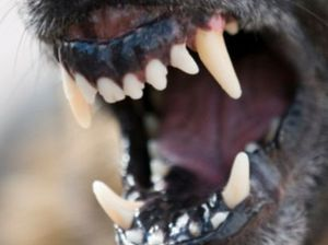 Woman mauled in suspected dog attack
