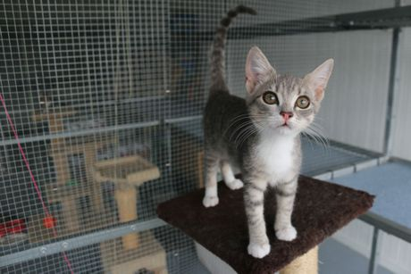 RSPCA PEt Adoption Day: Little Lema is three months old and in need of a caring owner. Photo Laura McKee / The Observer