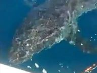 An angler caught this image of a shark circling his boat off Blacksmiths beach near Newcastle