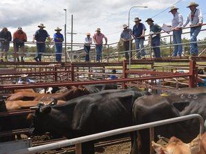 Warwick livestock markets enjoy steady rise in 2015