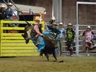 George Chong on Little Chill in the open bull ride. Photo Allan Reinikka / The Morning Bulletin