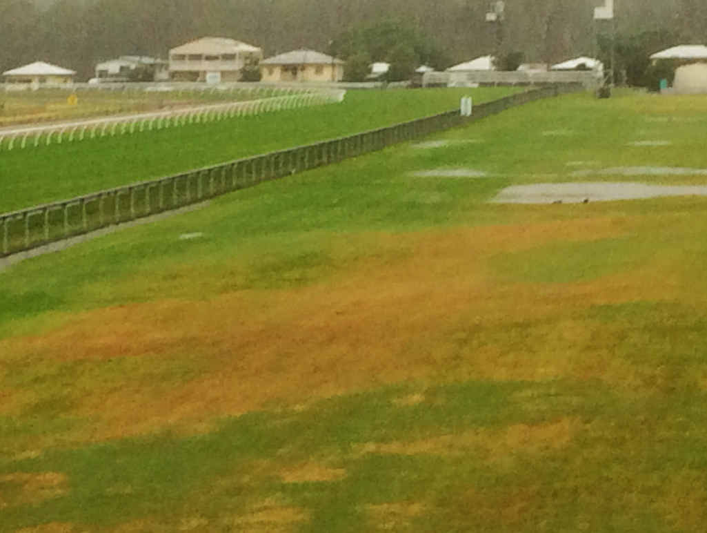 NO CHANCE: It is not hard to see why the Ipswich Turf Club had no choice but to abandon last Friday's scheduled meeting.