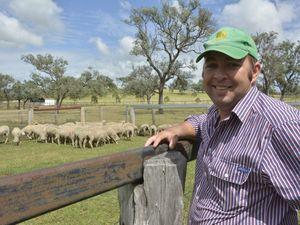 Fat lambs