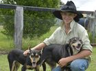 Glenco Working Dogs owner Cody Glendinning. At just 15, this young worker has already shown he has an insight into the industry that belies his age. Photo Tara Miko / The Chronicle