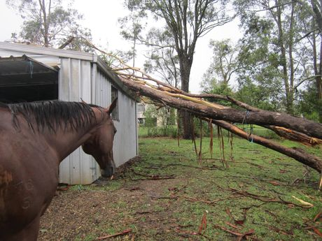Trees were brought down during storms at Yarraman, north of Toowoomba.