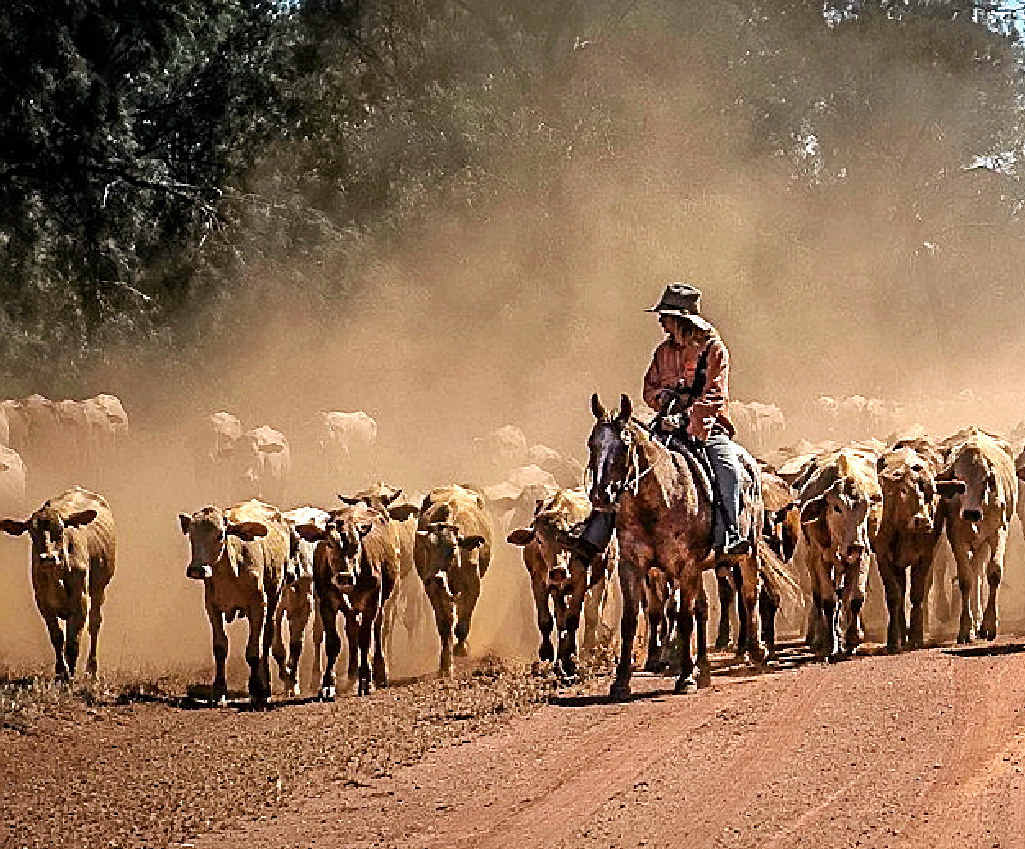 AUSSIE MAGIC: Photographer Alice Mabin captured one of Australia's biggest ever cattle drives in history.