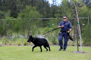 Police canine unit was sent out over an armed robbery at a service station in Tweed Heads South. Photo: Nolan Verheij-Full / Tweed Daily News