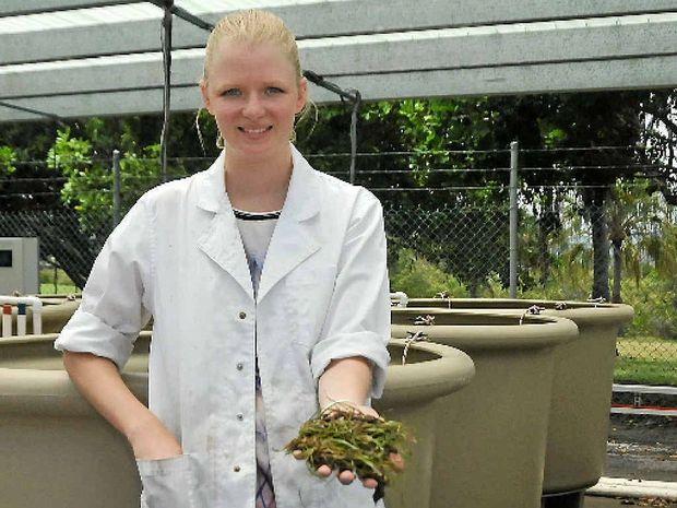SCIENCE EYE: Student Hannah Wilson is this week's Girl Friday.