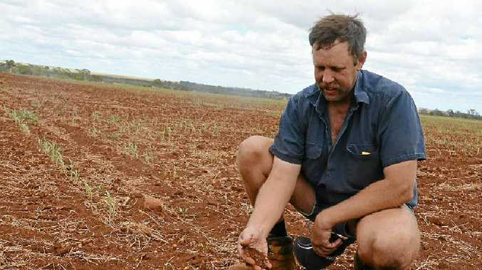 FINANCIAL SECURITY: South Burnett farmer Glen Unverzagt has sold Hope Dairies two properties, and a third has been leased from him for cropping.