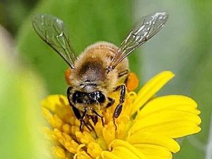 Bee sure to buzz over to Gin Gin for hive of activity