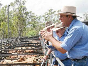 Cattle sale smashes records despite drought
