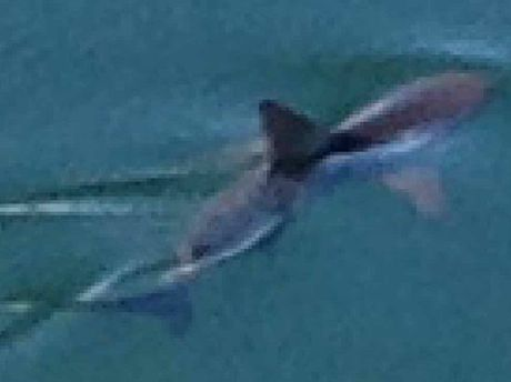 DANGER LURKS: The two-metre shark a Twin Waters resident photographed from his unit.