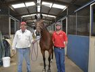 Trainer Matt Kropp (left) with stable foreman Matt Gleeson and six-year-old gelding Billy Goat at Clifford Park this week.