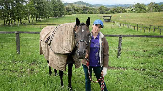 EXPENSIVE BUSINESS: Horse owner Mykaella Gosper, from Blakebrook, had to vaccinate seven horses for the North Coast National last year.