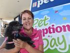 Bridget Smith preparing for Petstock's Pet Adoption Day with her four-pawed friend Abby.