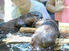 OTTER FRIENDS: Feed the otters, along with other zoo animals, at the Rockhampton Zoo over the weekend. Otter feeding is on at 2.30pm today and tomorrow.