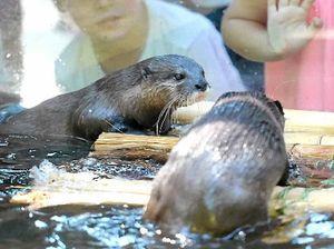 Rockhampton Zoo 2