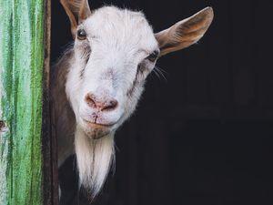 Have you got Bundaberg's best goatee?