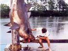 Shark attack survivor's words of experience
