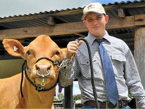 Local cattle exhibitors stand out in the crowd at Allora