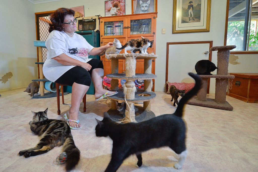 CAT CHAT: Animal lover Anita Coad has turned her Tannum Sands home into a cat rescue centre, but said growing numbers of abandoned and breeding cats needed to be addressed.