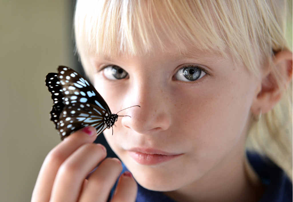 MASS MIGRATION: Sofia Draper with a blue tiger butterfly one of the many hundreds in the Gympie region.