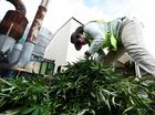 Truckload of pot goes up in smoke