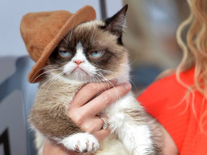 Celebrate your furry friends for International Cat Day