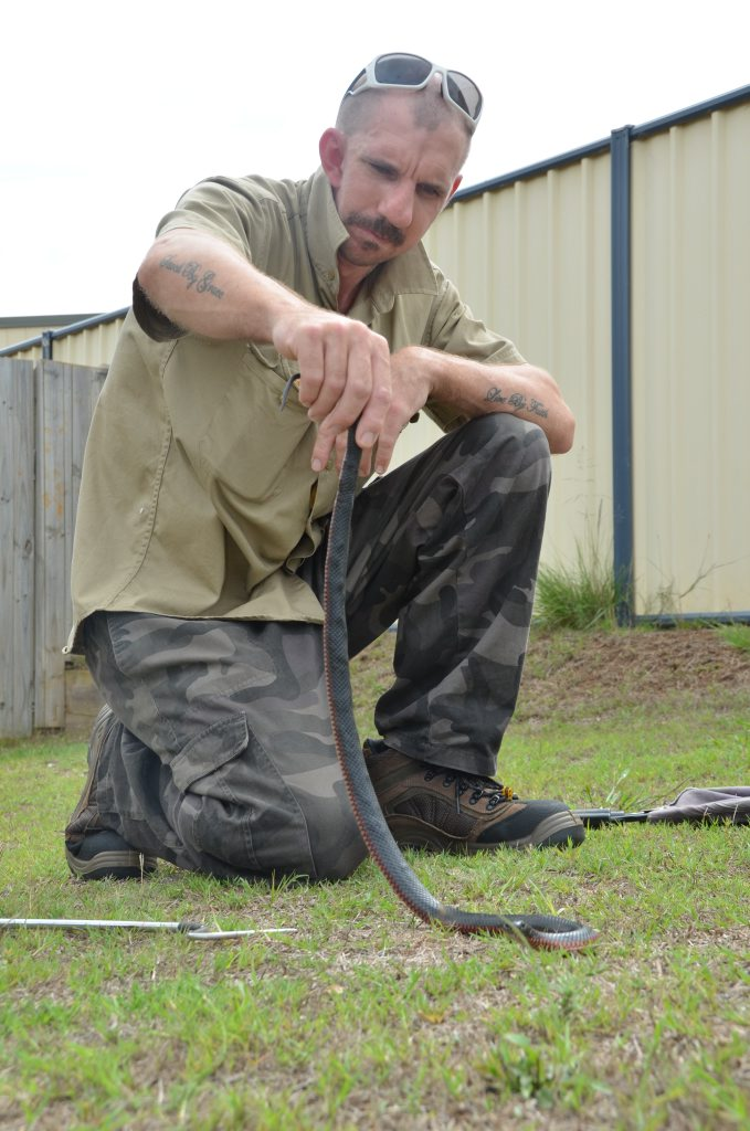 Christian Andersen caught a red bellied black snake in a suburban shed.