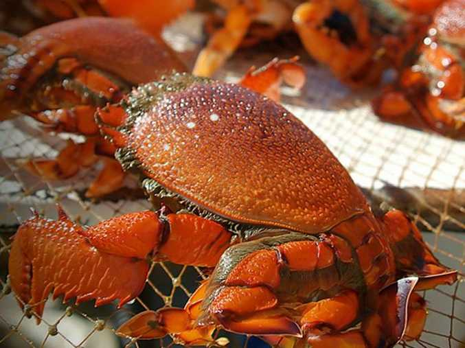 Minister welcomes changes to management arrangements for spanner crab fishery.