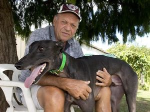 Live baiting claims rock city greyhound trainer