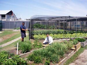 Arthur Gorrie prisoners help free plant program flourish