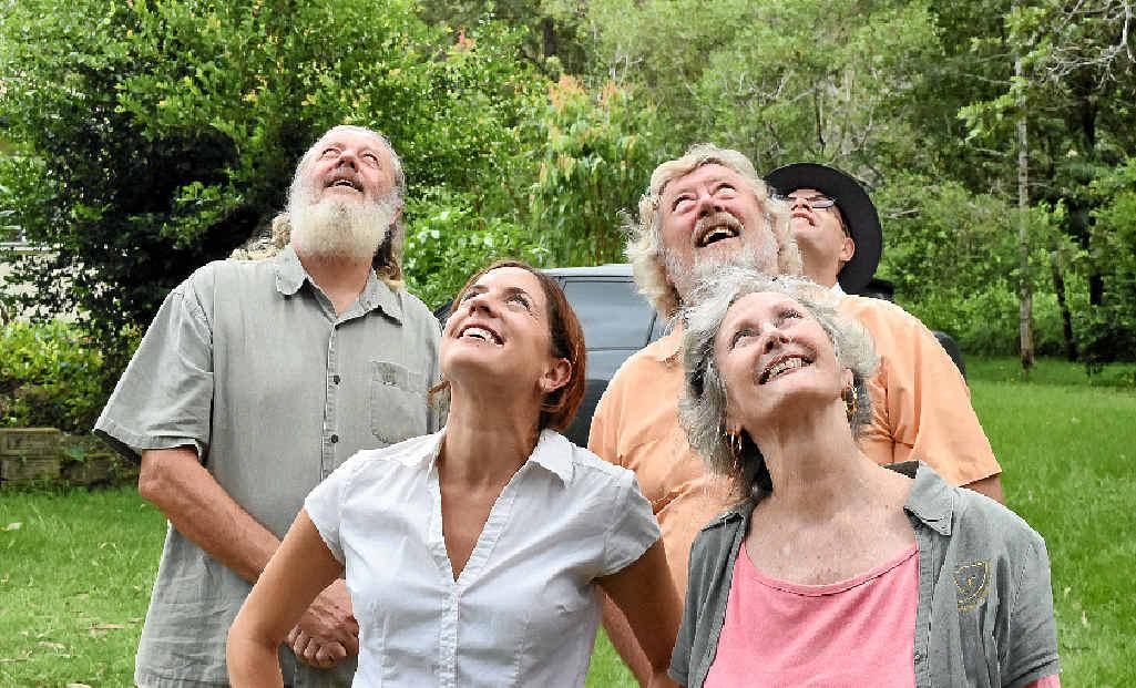 AN ALLIANCE FOR KOALAS: (from left) Dailan Pugh from NEFA, NCC CEO Kate Smolski, FOK president Lorraine Vass and NPA spokesman Ashley Love, all gazing up at a lone koala in the trees.