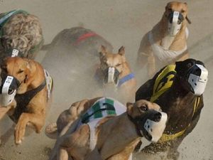 Greyhound racing public hearing begins in NSW