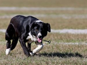 New fenced area for Aroona's four-legged friends