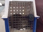 Video: George the anxious cat waits for cyclone
