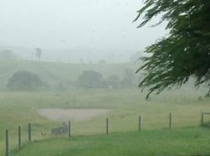 Cyclone Marcia: Reader video from Darts Creek
