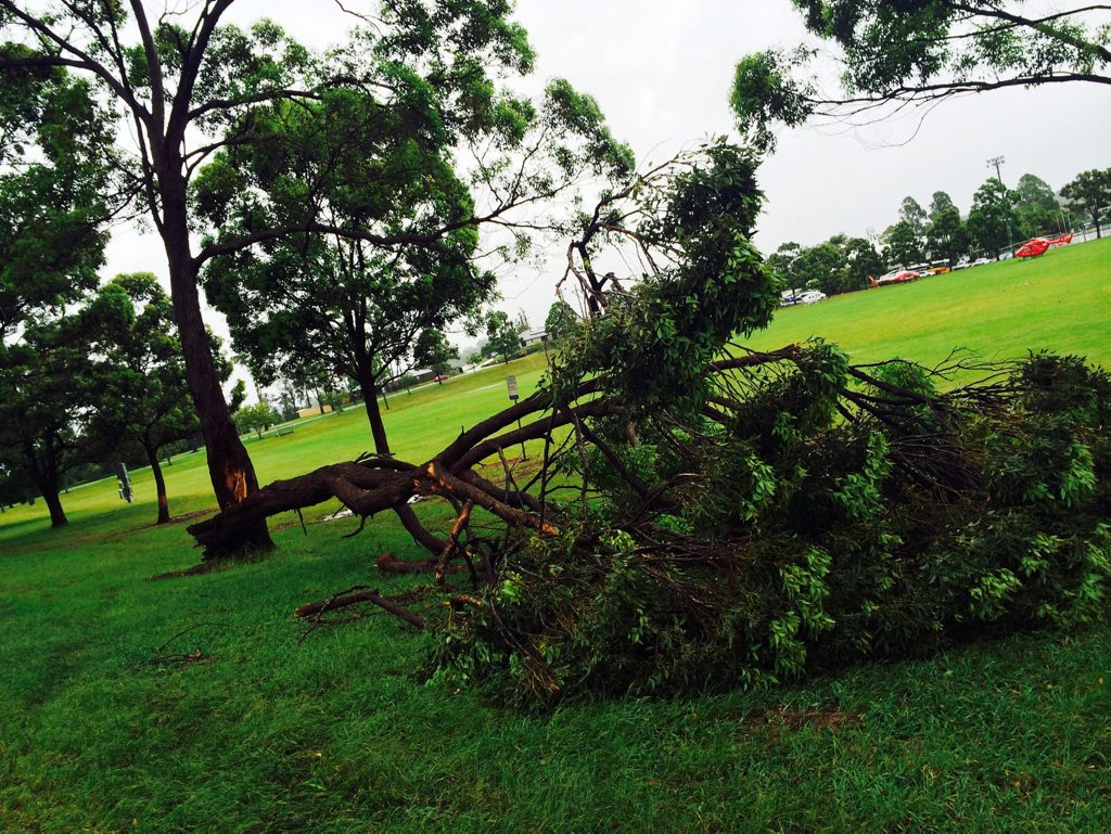 Hepburn Park - Holland St, Goonallabah, Damaged due to the windy weather during cylone Marcia. Photo : Phil Clynes