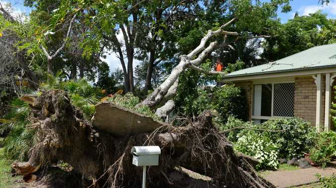 GARAGE CRUSHED: Homeowner Sandra Robertson had a large tree that was blown over in the cyclone removed from her front yard. Photo: Mike Knott / NewsMail