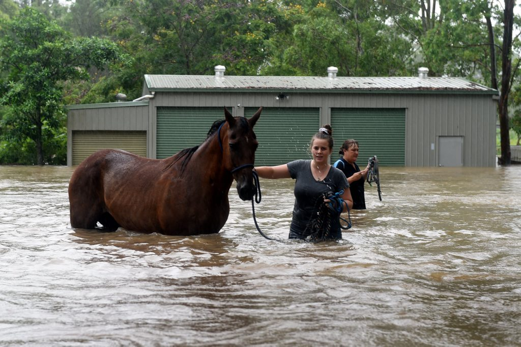 Cartmill Centre of Riding for the Disabled, Burpengary was helping their horses to safety before they got flooded. Photo Vicki Wood / Caboolture News