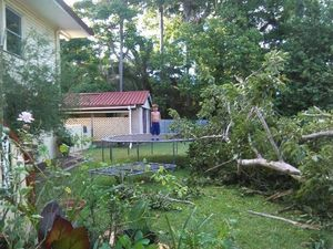 Massive fig tree crashes while children play in yard