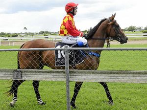 King aims high with maiden mare