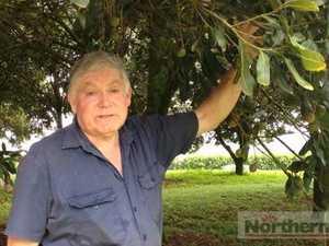 Macadamia season