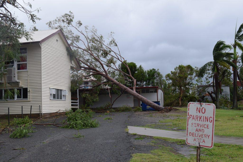 A fallen tree at Berserker Street State School Photo Lisa Benoit / The Morning Bulletin