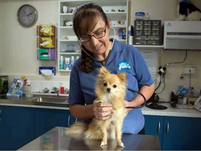 PET SAFETY: Veterinarian Vicky McClure gives pomeranian Molly the once-over.